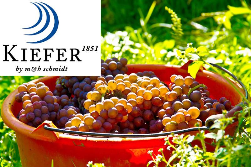 Collage Grauburgunder-Trauben und Logo des Weinguts Kiefer