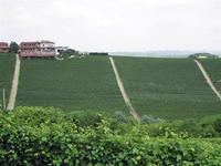 Weingut von Elio Altare, Piemont
