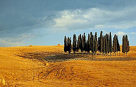 Landschaft Montalcino