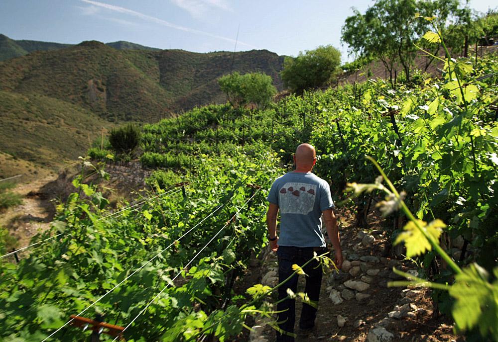 """Blood Into Wine"""": zwei Weinpioniere im Wilden Westen"""