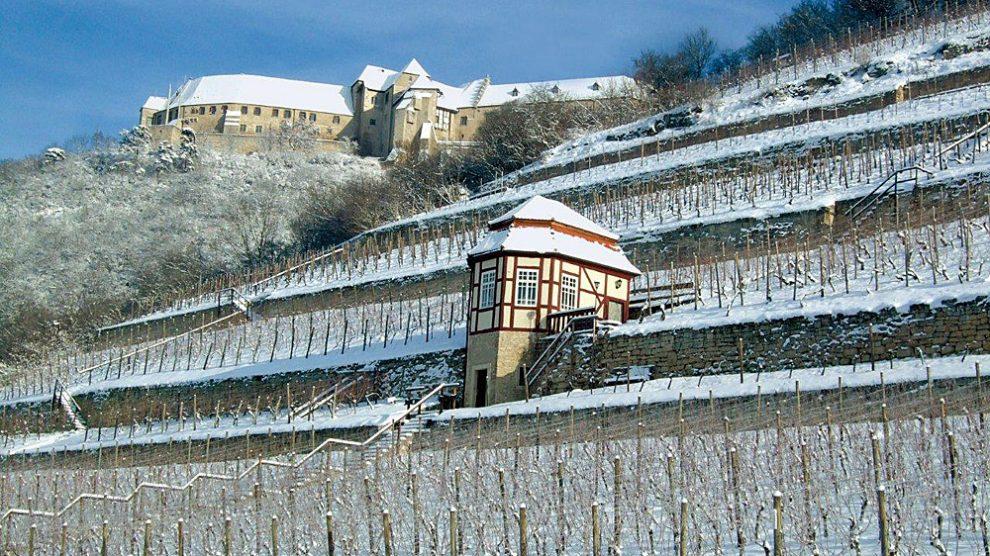 Herzoglicher Weinberg Schloss Neuenburg | Foto: Weinbauverband Saale-Unstrut