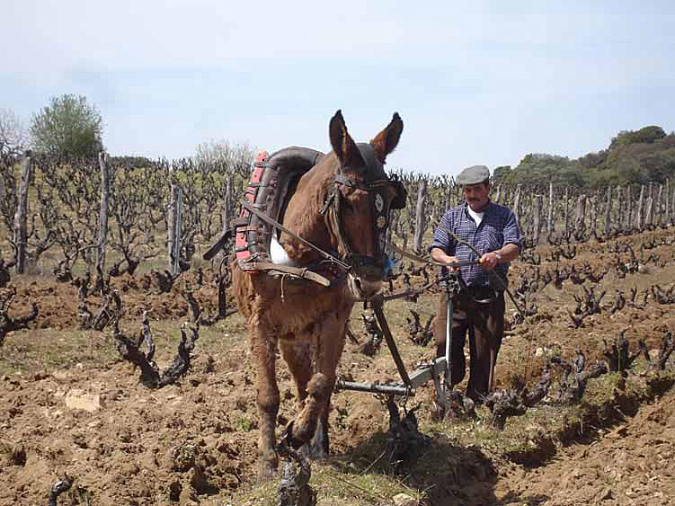 Die Bearbeitung des Weinbergs | Foto: Bodegas Jiménez-Landi