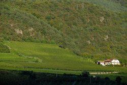 Weinberg von Alois Lageder in Südtirol