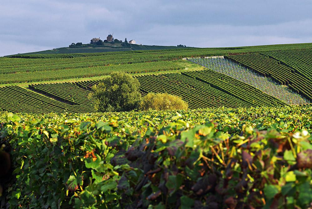 Weinberge von Ruinart in der Champagne | Foto: Ruinart