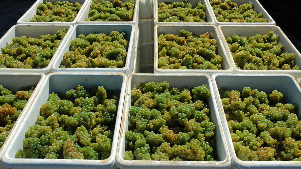 Weintrauben in Kisten