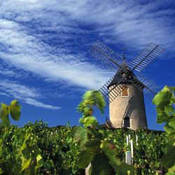Beaujolais Moulin-a-Vent | Foto: Inter Beaujolais