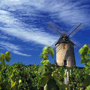 Beaujolais Moulin-a-Vent | Foto: David Gillet / Inter Beaujolais