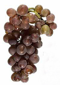 Pinot Gris | Foto: ©Vitis International Variety Catalogue