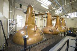 Die Stills der Highland Park Distillery