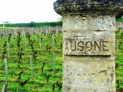 Die Rebstöcke von Chateau Ausone | Foto: Chateau Ausone