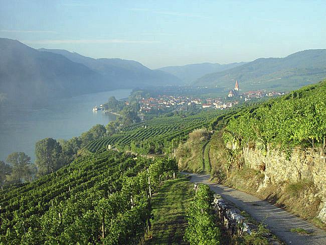 Donau mit Weinbergsterrassen | Foto: ÖWM