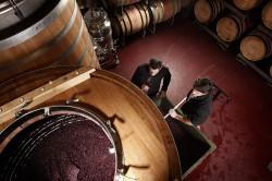 Rotwein im offenen Gärbottich