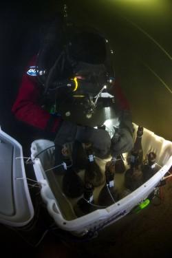 Taucher bei der Bergung der Champagnerflaschen aus dem Schiffswrack