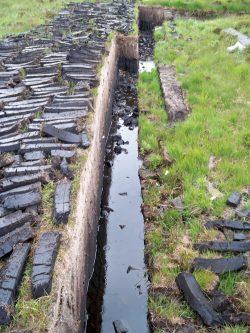 Das Grundwasser, das für die Whiskyproduktion verwendet wird, sickert über Jahre durch meterhohe Torfschichten.