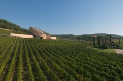 Das Weingut Petra