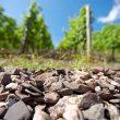 Große Gewächse 2012: die Nahe – steinreiche Spitzenweine
