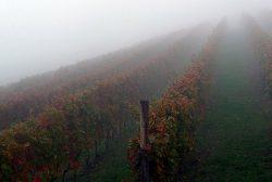 November im Piemont