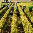 Bordeaux 2014: Was das rechte Ufer zum neuen Jahrgang sagt