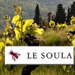 Die großen Weine von Le Soula: Ein Gespräch mit Mark Walford