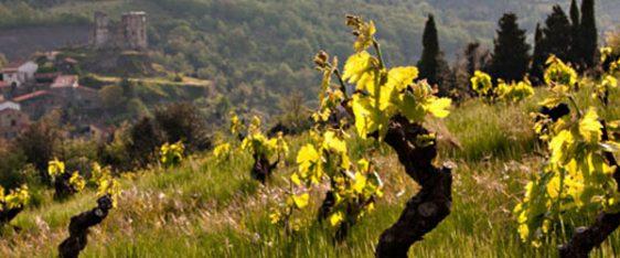 Weinberge von Le Soula