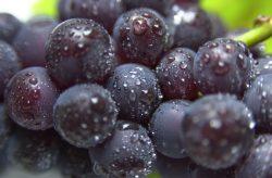 Resveratrol in Rotweintrauben