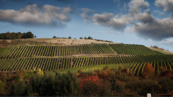 Das Weinanbaugebiet Nahe