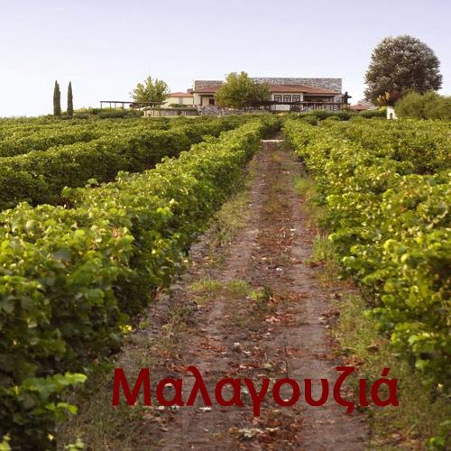 Artikelbild Malagousia