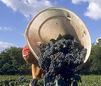 Bordeaux 2015 Artikelbild