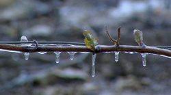 Frostnächte in der Steiermark