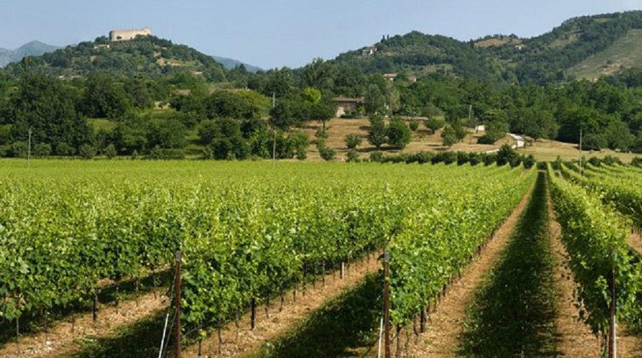 Prosecco-Anbaugebiet Montello