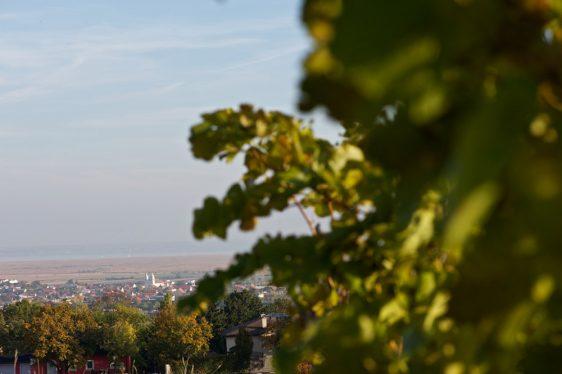 Blick vom Leithaberg auf den Neusiedlersee