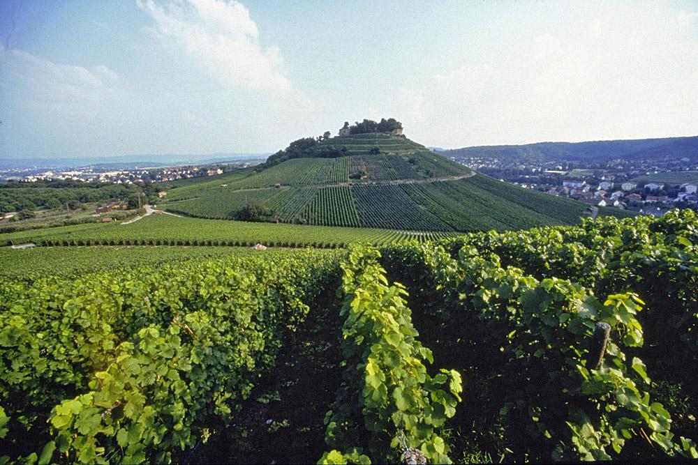 Weinberge in Württemberg