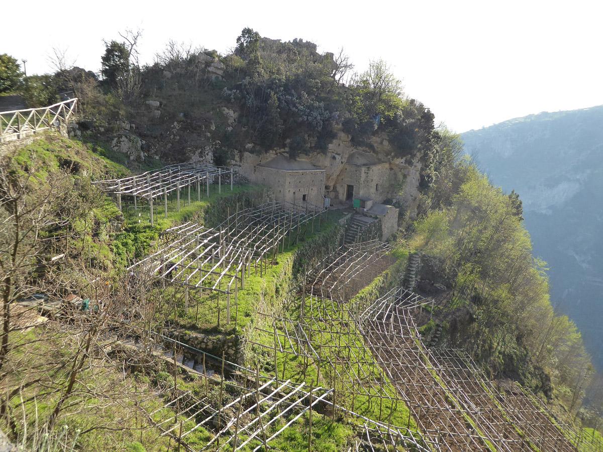 Weinterrassen bei Furore