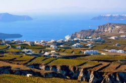 Weinberge auf Santorini