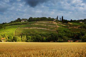 Weinberge Saale-Unstruth | ©www.deutscheweine.de