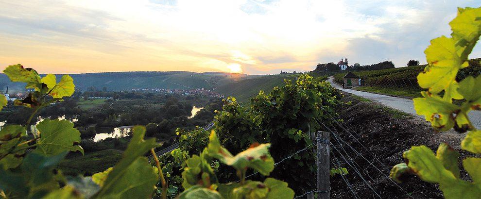 Weinberge in Franken
