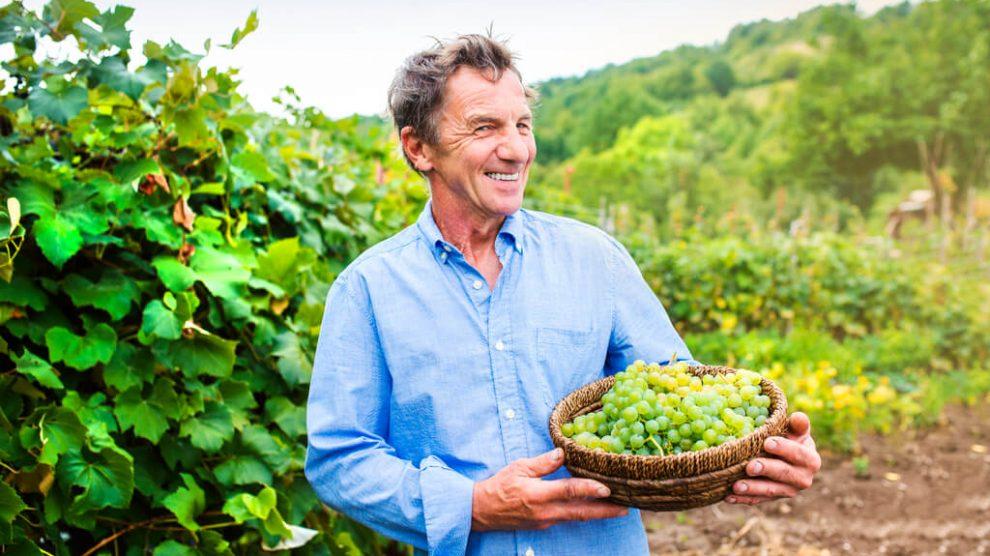 Biowein Mann mit Weintrauben
