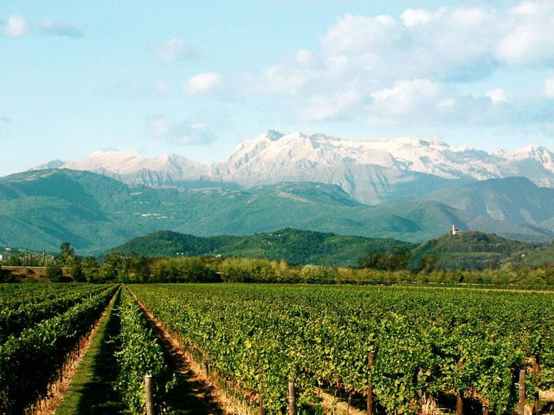 Blick auf die Berge im Anbaugebiet Isonzo im Friaul