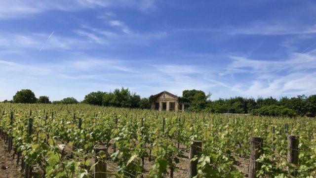 Das Weingut Saint Emilion in Bordeaux