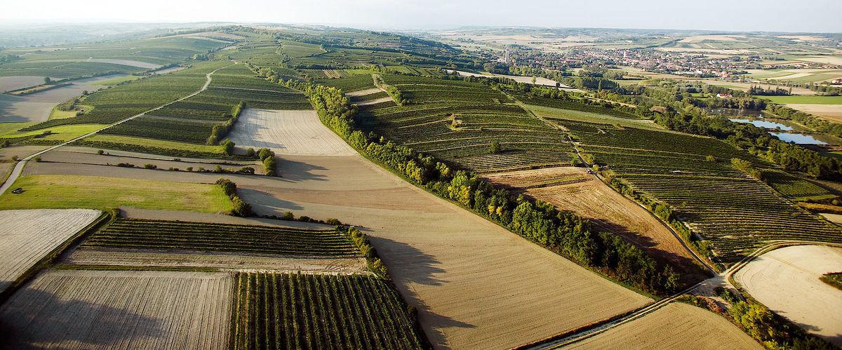 Weinberge im Burgenland ©_ÖWM