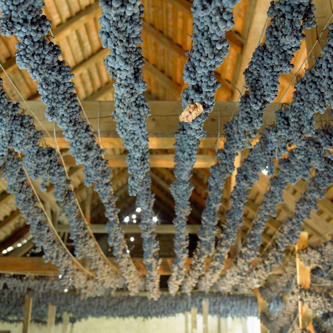 Weintrauben trocknen unter dem Dach