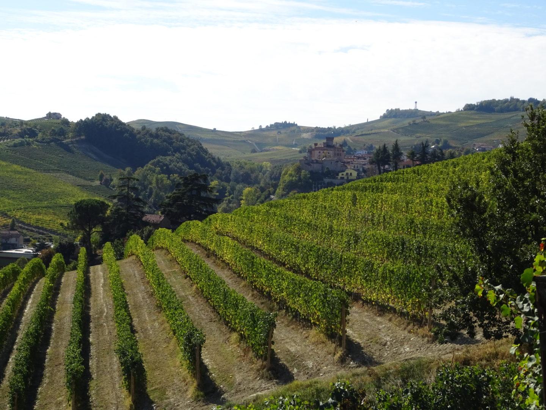 Die Lage Cannubi vom Weingut Tenuta Carretta