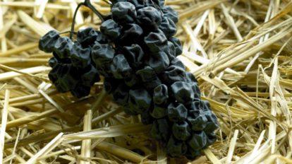Trockene Trauben auf Stroh