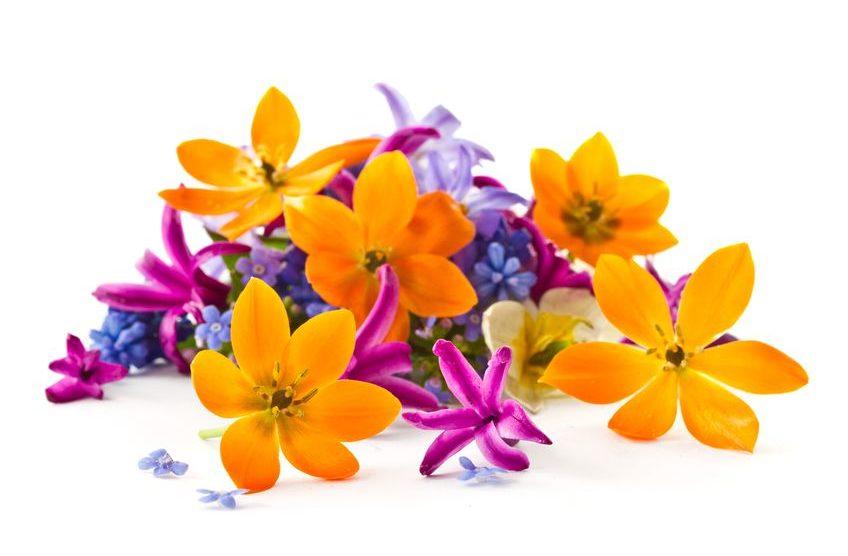 Aroma Blumen