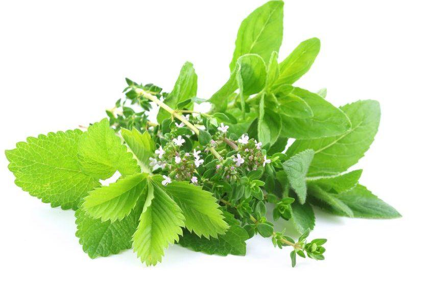 Aroma Wildkräuter