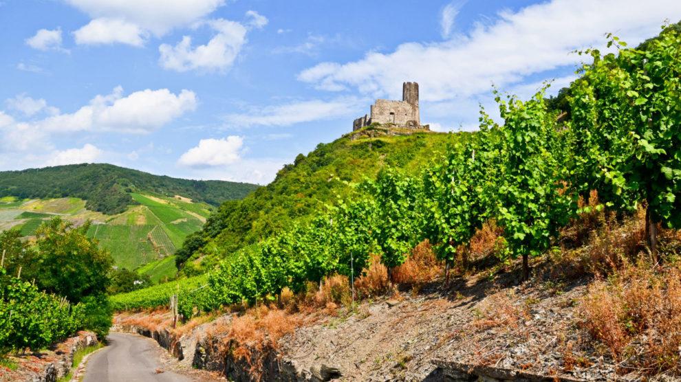Moseltal Deutschland: Blick auf Weinberge und Ruinen der Burg Landshut in der Nähe von Bernkastel-Kues, Europa