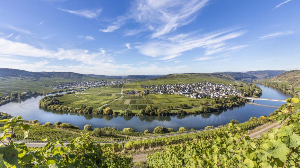Die Mosel-Saarschleife in Trittenheim