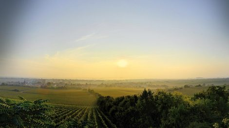 Große Gewächse Pfalz