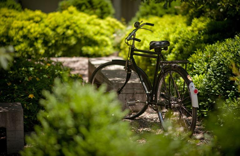 Fahrrad-Mobilität in den Weinbergen