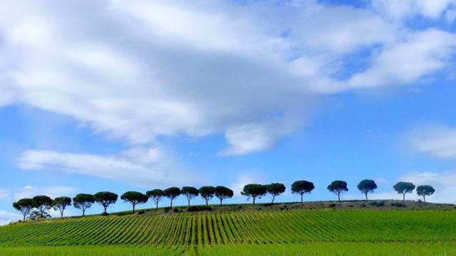 Neue Weissweine der Toskana